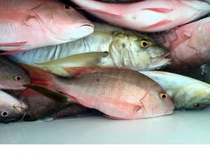 Fishin Mission Charters At Whale Harbor Marina Islamorada Florida Keys
